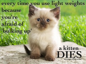 bulking kitten